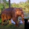 VIDEO Spašeni slon obožava opuštanje uz zvukove klavira