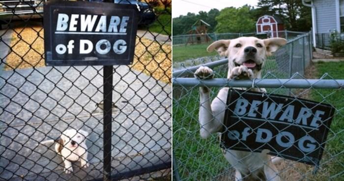 20 presmiješnih pasa koji ne bi niti mrdnuli da vide lopova