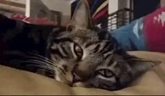 Kamera je snimila trenutak u kojem mačka širi zjenice, ovo je hipnotizirajuće