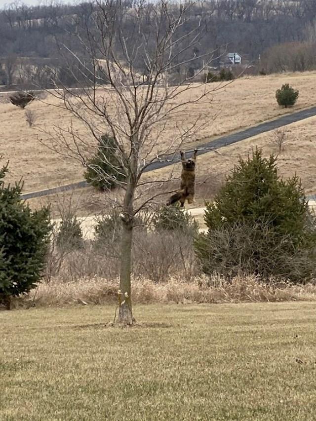 ...maca se sakrila na drvo i u jednom trenutku izgubila ravnotežu.