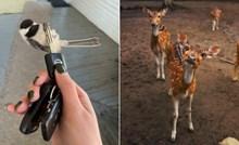 20+ ljudi koji su ugledali neodoljivo slatke životinje i morali podijeliti fotke sa svima