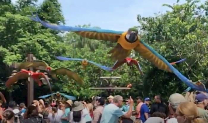 VIDEO Usporena snimka papiga u letu potpuno će vas opustiti