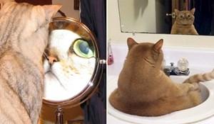 20 presmiješnih mačaka koje nastoje shvatiti kako funkcionira ogledalo