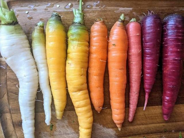 3. Mrkve koje sam uzgojio prošle sezone dolaze u jako zanimljivom spektru boja