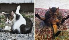 20 uzrujanih mačaka koje je netko prekinuo u održavanju higijene