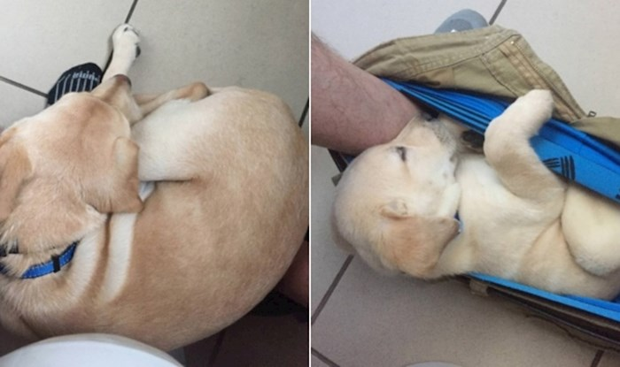 Lik je odlučio na ekstremno čudan način svima pokazati koliko njegov psić brzo raste