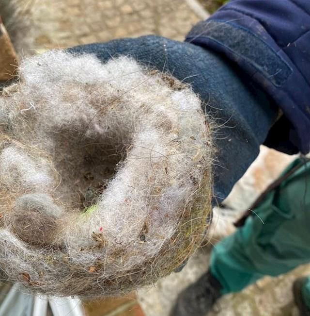 6. Ljudi su u vrtu otkrili gnijezdo koje su ptice izgradile od neobičnog materijala - dlake njihovih pasa.