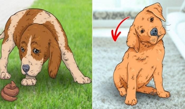 7 čudnih navika koje ima većina pasa, saznajte zašto