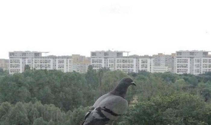 Ovaj golub pronašao je prečudno mjesto za odmor i baš ga briga za osobni prostor