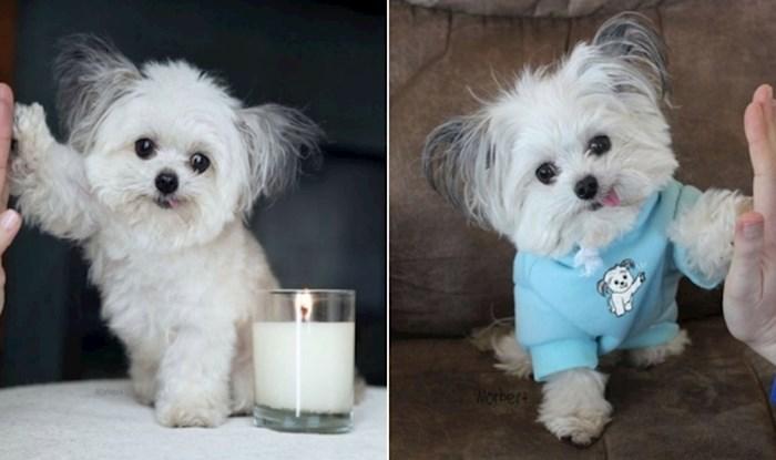 Preslatki psić Norbert postao je Instagram zvijezda jer obožava ljudima davati petice