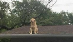 Pas koji voli sjediti na krovu zabrinuo je prolaznike, pa su vlasnici sve objasnili porukom