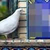 Detalj na mozaiku jako je zainteresirao jednog znatiželjnog goluba