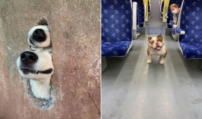 Postoji grupa na Fejsu u kojoj ljudi dijele fotke pasa koje slučajno sretnu, izabrali smo najslađe
