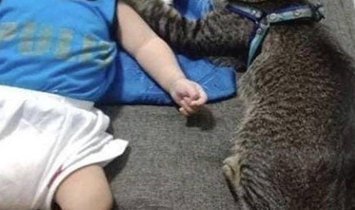 Ova maca je najbolja dadilja na svijetu, pogledajte kako se brine o maloj bebi