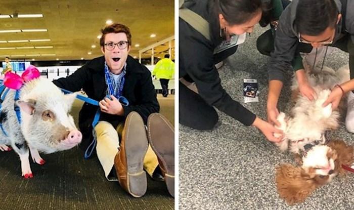 Vesele terapeutske životinje slobodno šetaju zračnom lukom u San Franciscu i druže se s putnicima