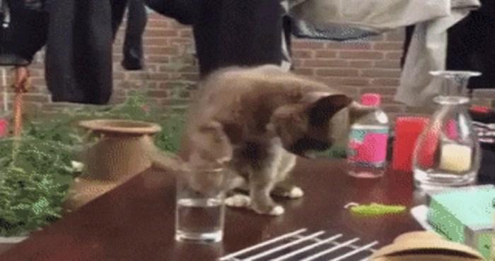 Mačka ima prečudnu metodu čišćenja, morate ovo vidjeti