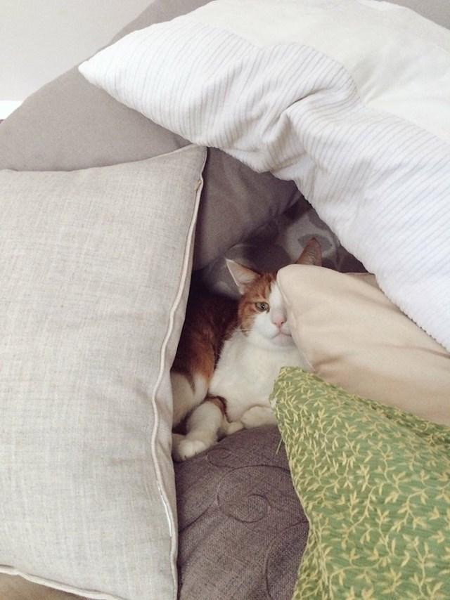 """12. """"Moja mama danas je našoj mački napravila tvrđavu od jastuka."""""""