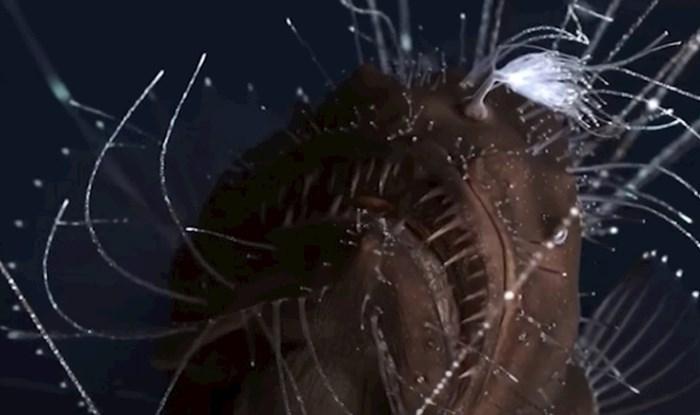 VIDEO Zastrašujuća bića iz oceanskih dubina koja izgledaju kao da su s drugog planeta