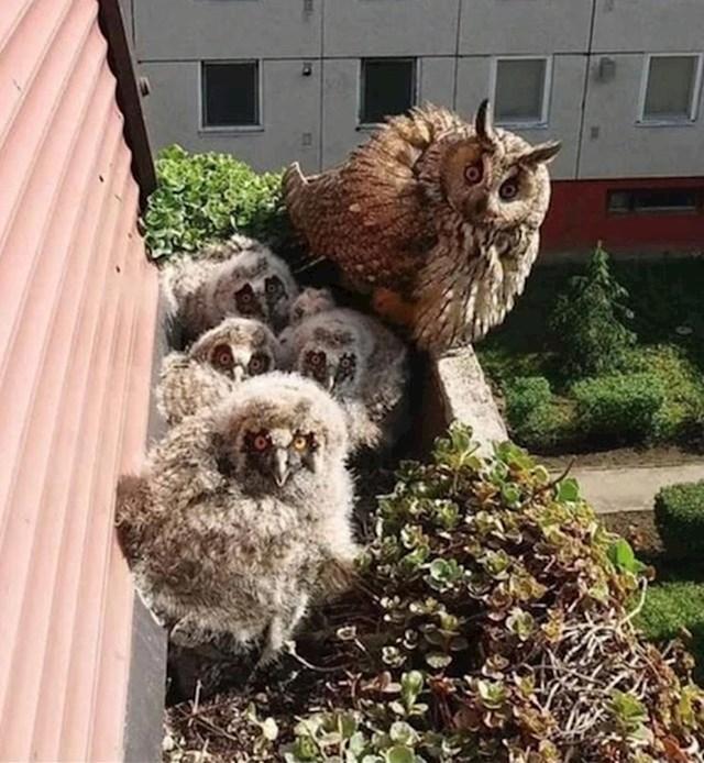 "10. ""Otkrio sam da pored mojeg balkona živi jedna simpatična obitelj."""