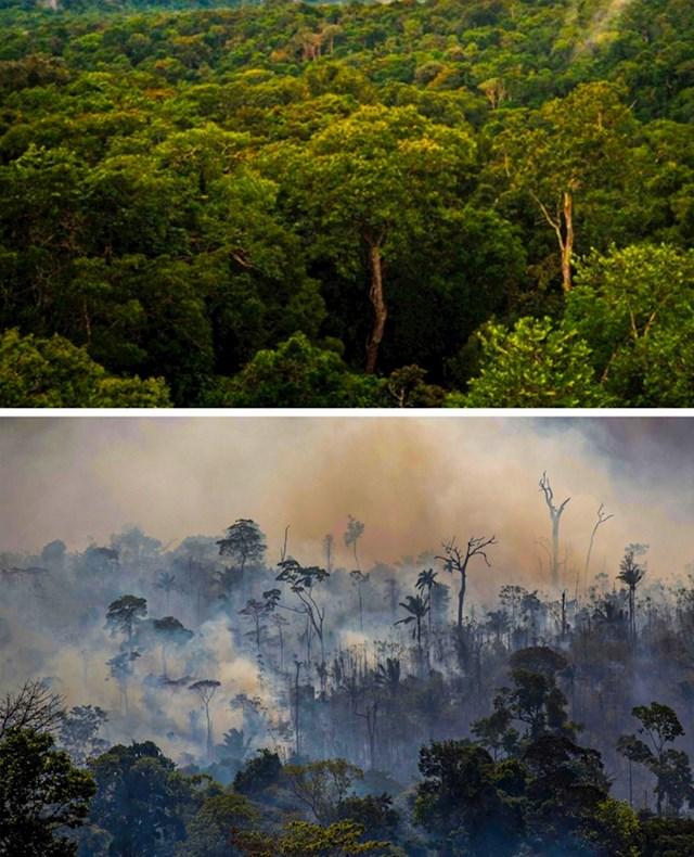 12. Požari bijesne diljem svijeta i uništavaju šume, ovo se dogodilo Amazoniji.