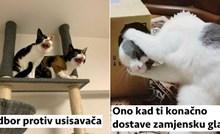 20+ blesavih fotki mačaka kojima ćete se pošteno nasmijati