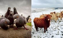 20+ fotki životinja koje izgledaju kao da poziraju za omot nekog hit albuma