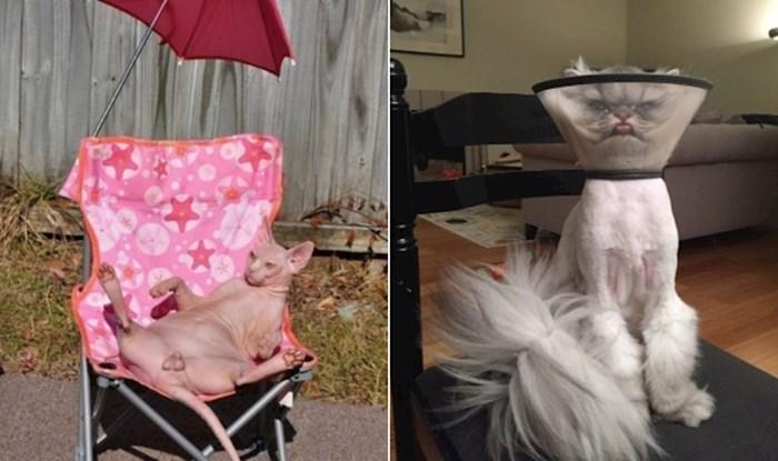 Ekipa na Twitteru dijeli fotke svojih mačaka u smiješnim situacijama, evo najboljih primjera