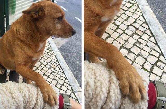 """3. """"Imala sam jako loš dan. Odjenom mi je na autobusnoj stanici prišao ovaj pas i zahtijevao da ga pomazim. Dan mi je odmah postao super!"""""""