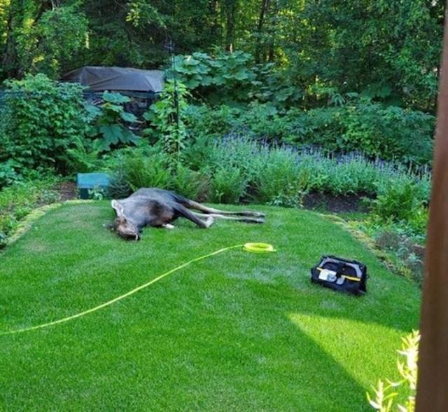 """6. """"Sob se odmara u dvorištu moga tate"""""""