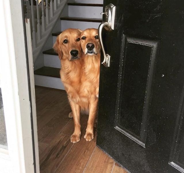 5. Psi su ispali kao da imaju spojene glave.