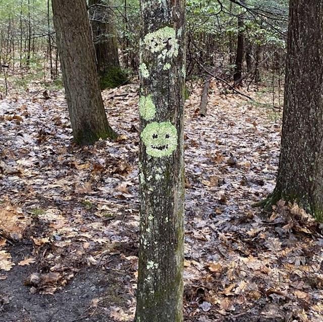 Nasmijano stablo 😊
