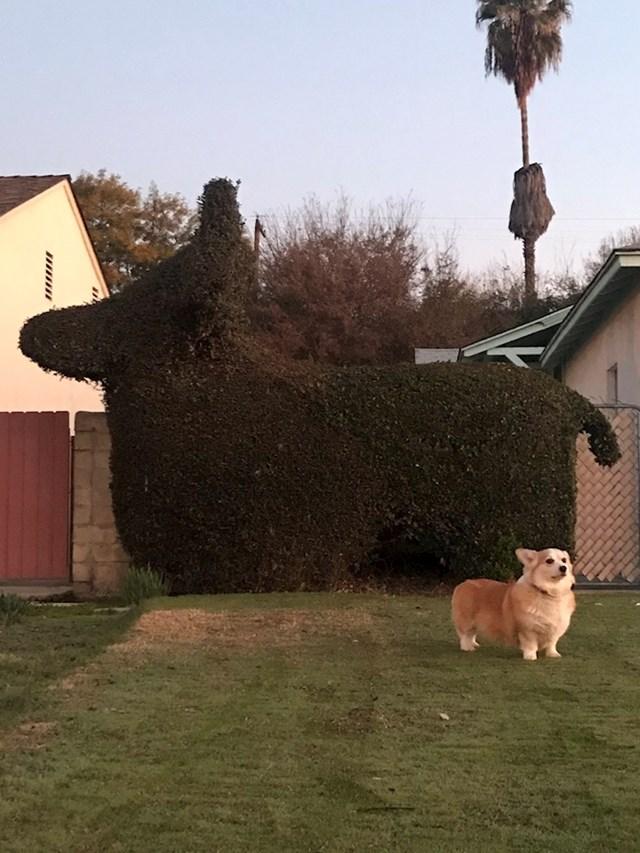 """4. """"Moji susjedi baš jako vole svojeg psa."""""""