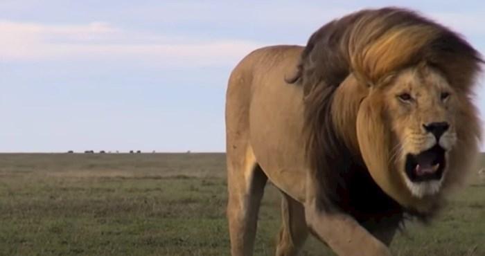 VIDEO 15 rijetkih i unikatnih životinja kakve još vjerojatno niste vidjeli