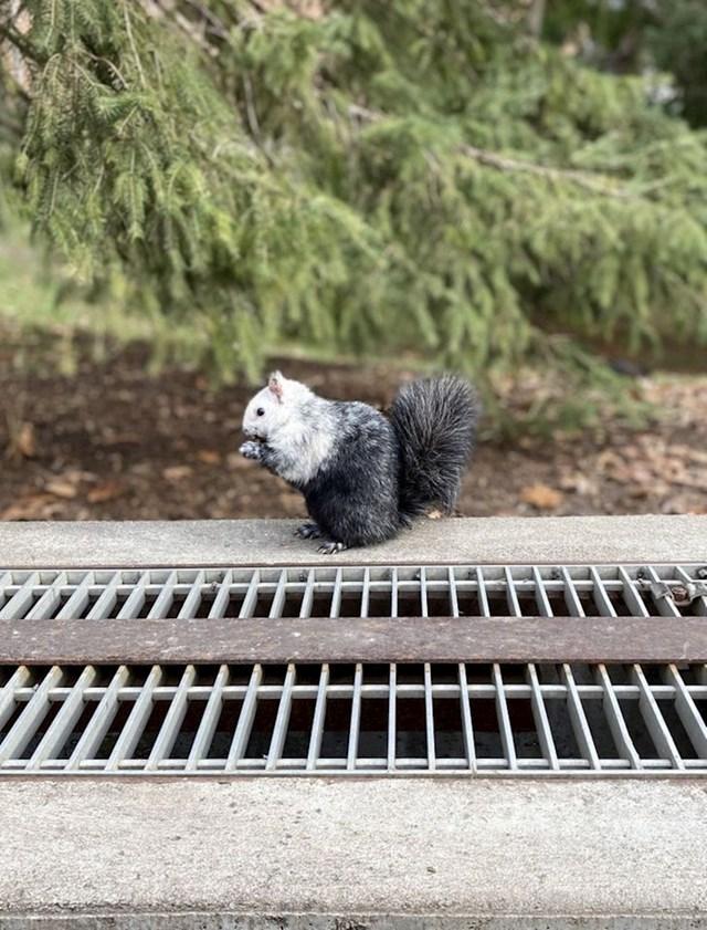 """9. """"Ova zanimljiva i unikatna vjeverica koju sam jučer uspio fotkati.."""""""