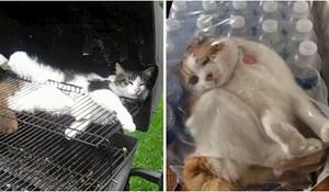 Nećete moći vjerovati kad vidite na kakvim sve čudnim mjestima mačke odmaraju