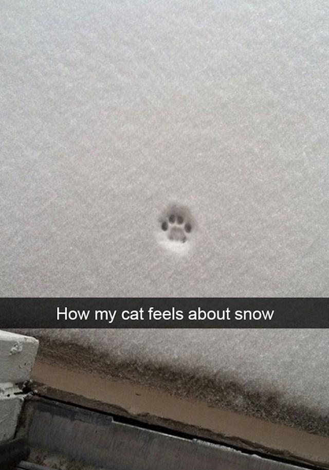 7. Evo koliko moja mačka voli snijeg...