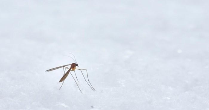 Urnebesni meme o komarcima koji kruži Fejsom nasmijao je tisuće, ovakvu usporedbu još niste vidjeli