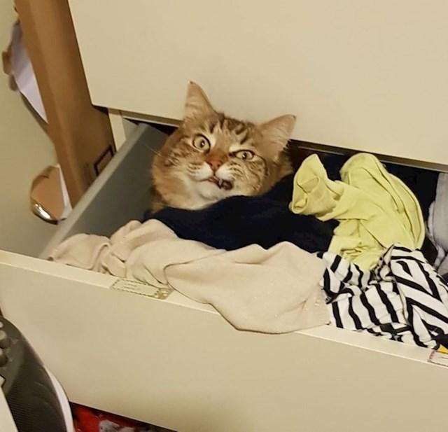 """17. """"Obožava spavati među mojom odjećom!"""""""