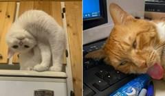 20+ ljudi pokazali su fotke svojih mačaka koje izgledaju kao da su se pokvarile i sve nas nasmijali