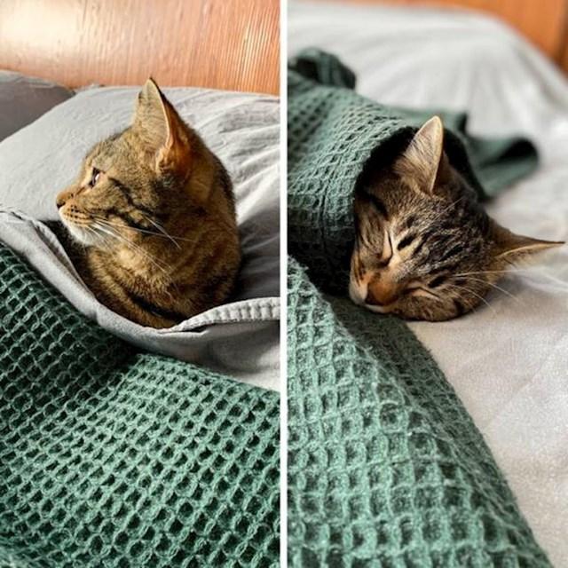 7. Najljepše je spavati u toplom krevetu svojih vlasnika, prekrivena dekicom..😻