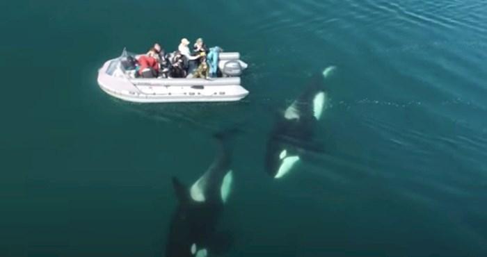 Dron je snimio skupinu kitova orka kako plivaju oko čamca, morate vidjeti ovaj rijedak prizor