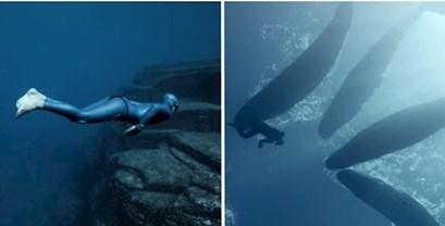 VIDEO Doživite čarobno podmorje iz perspektive ronioca na dah