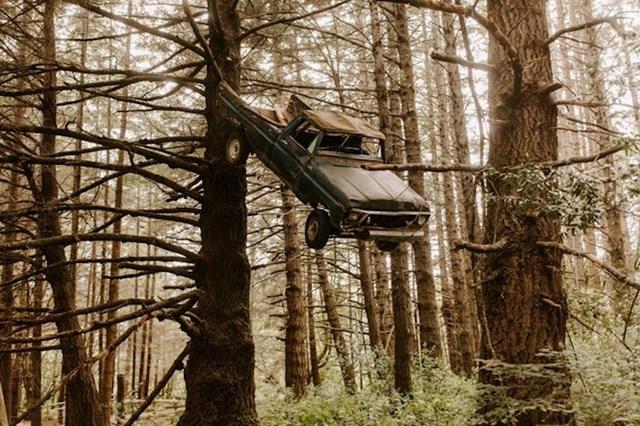 11. Pronašao je auto na stablu vozeći se kroz šumu.