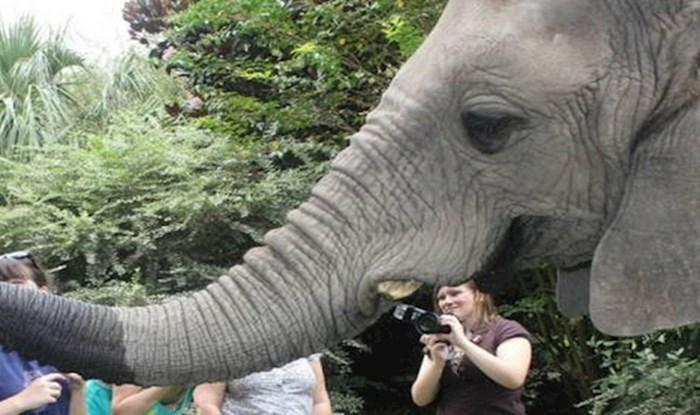 Simpatičnog slona naživcirali su dosadni turisti s fotoaparatima, pogledajte što je napravio