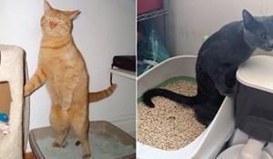 20 mačaka koje preferiraju veliku nuždu obavljati stojećki