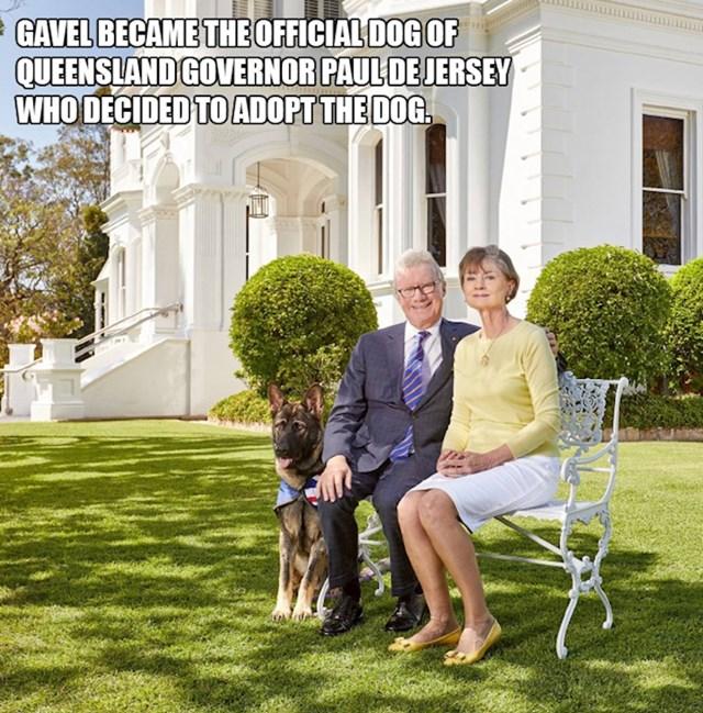 Gavel je postao službeni pas guvernera Queenslanda, Paula De Jerseyja, koji ga je odlučio udomiti.