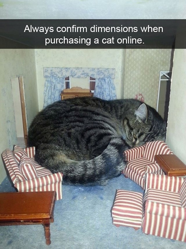 11. Uvijek provjerite dimenzije kad kupujete mačku preko interneta