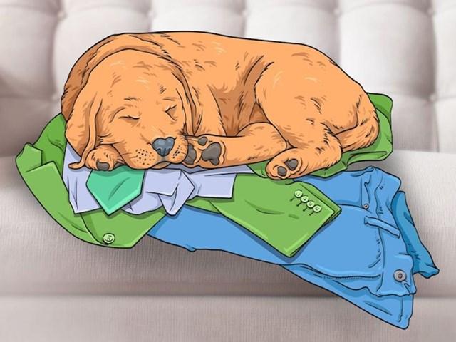 3. Zašto psi spavaju na odjeći?