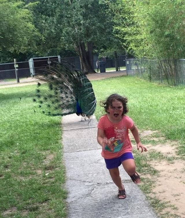 1. Djevojčica koja nije očekivala da će njezin prvi posjet zoološkom vrtu biti tako zastrašujuć...
