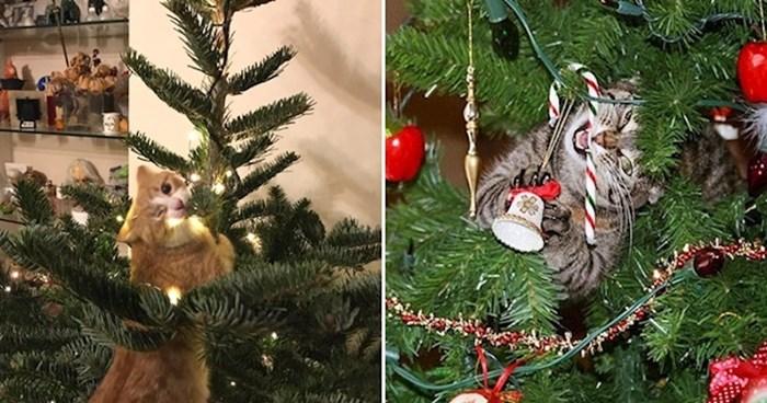 22 urnebesne fotke mačaka koje su odlučile napasti božićna drvca